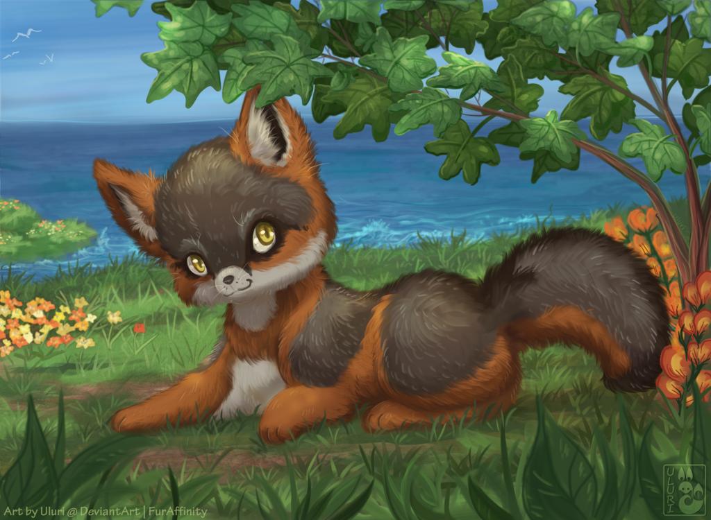 Sea Breeze Island Fox
