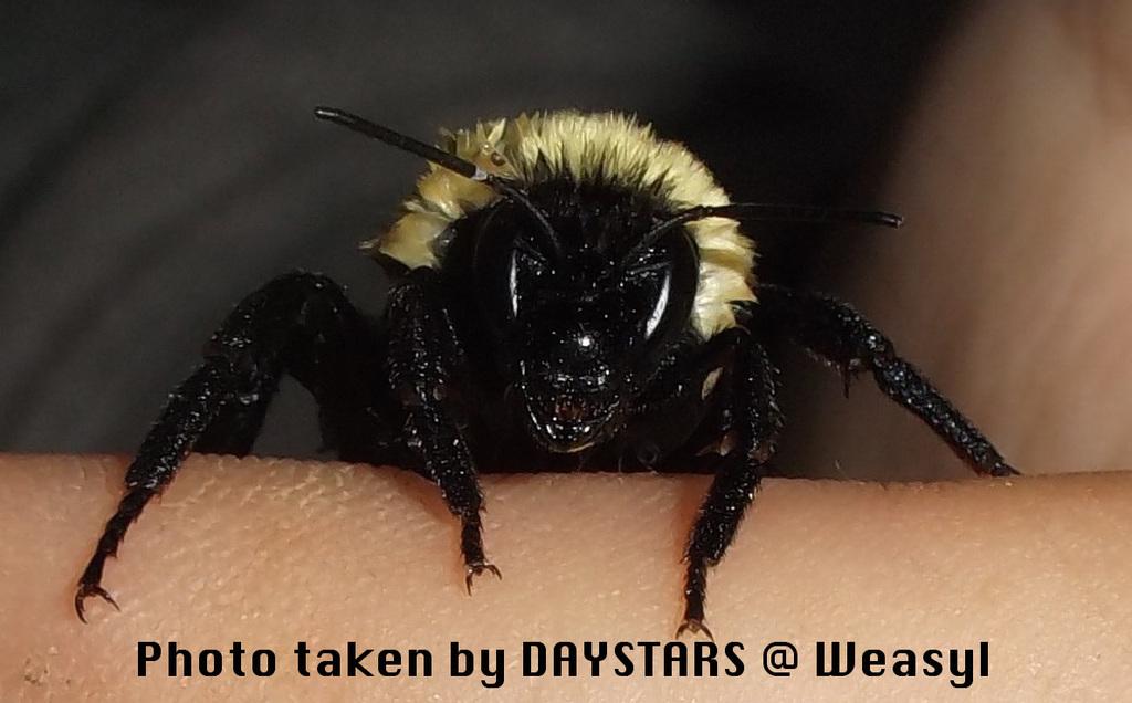 Saved a Bee 3.5