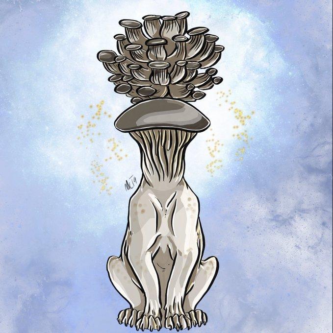 Mayshroom Pearl Oysters