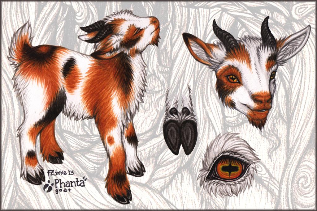 Phanta Goat