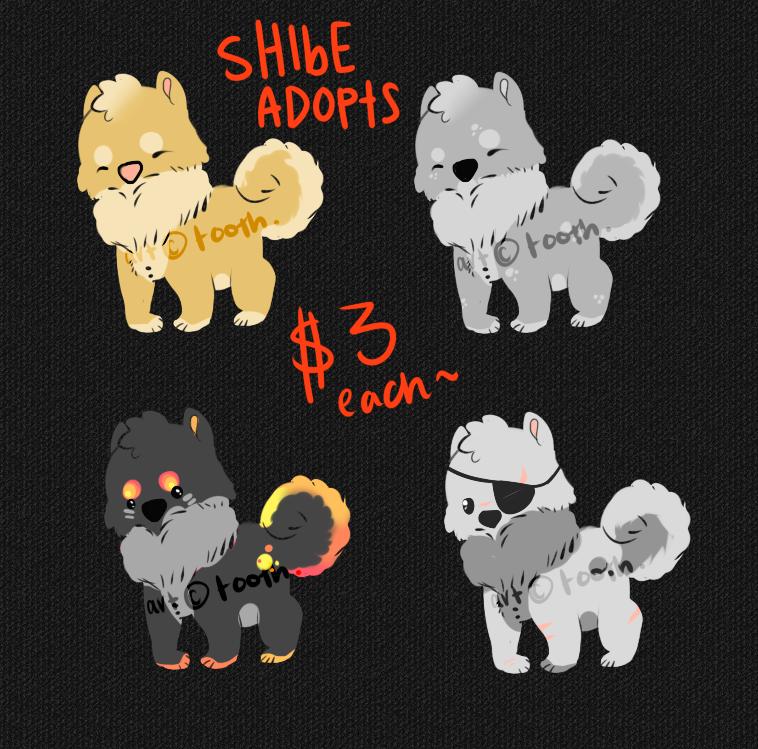 shibe adopts