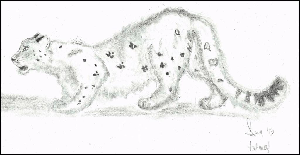 Most recent image: owo snow leopard