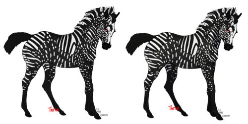 Lucifer (Melanin Zebra)(Sold)
