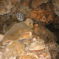 Black Hills Caverns Formations