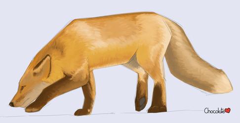 Fox Practice Sketch 4