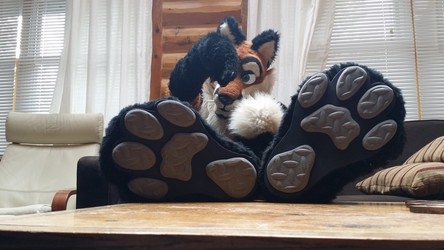 New paws for fox