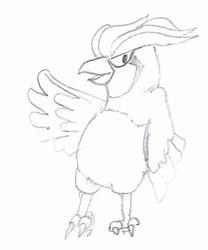 Pidgeotto Sketch