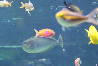 Square Colored Fish