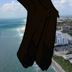 My paws in the air over Miami Beach