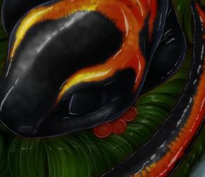 Salamander - Snowfall