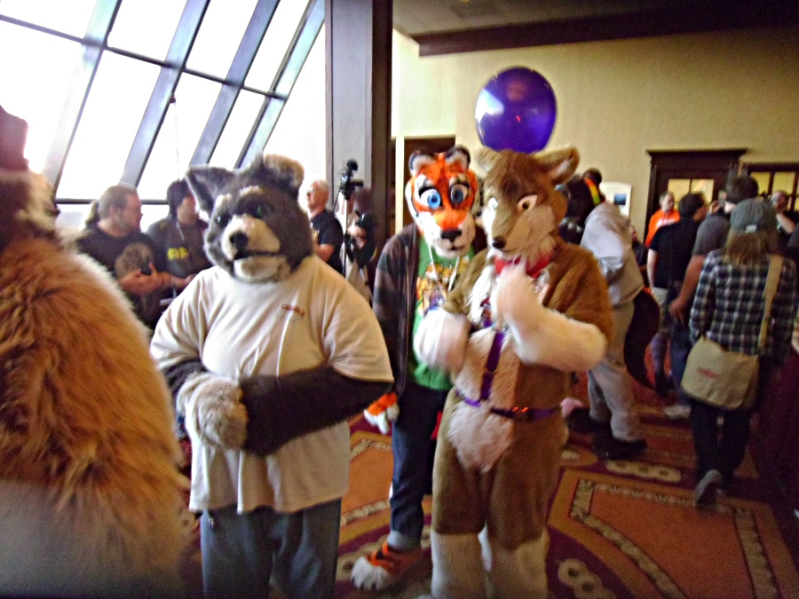Me and Terry the Tiger (Nova) at Furry Fiesta 2012