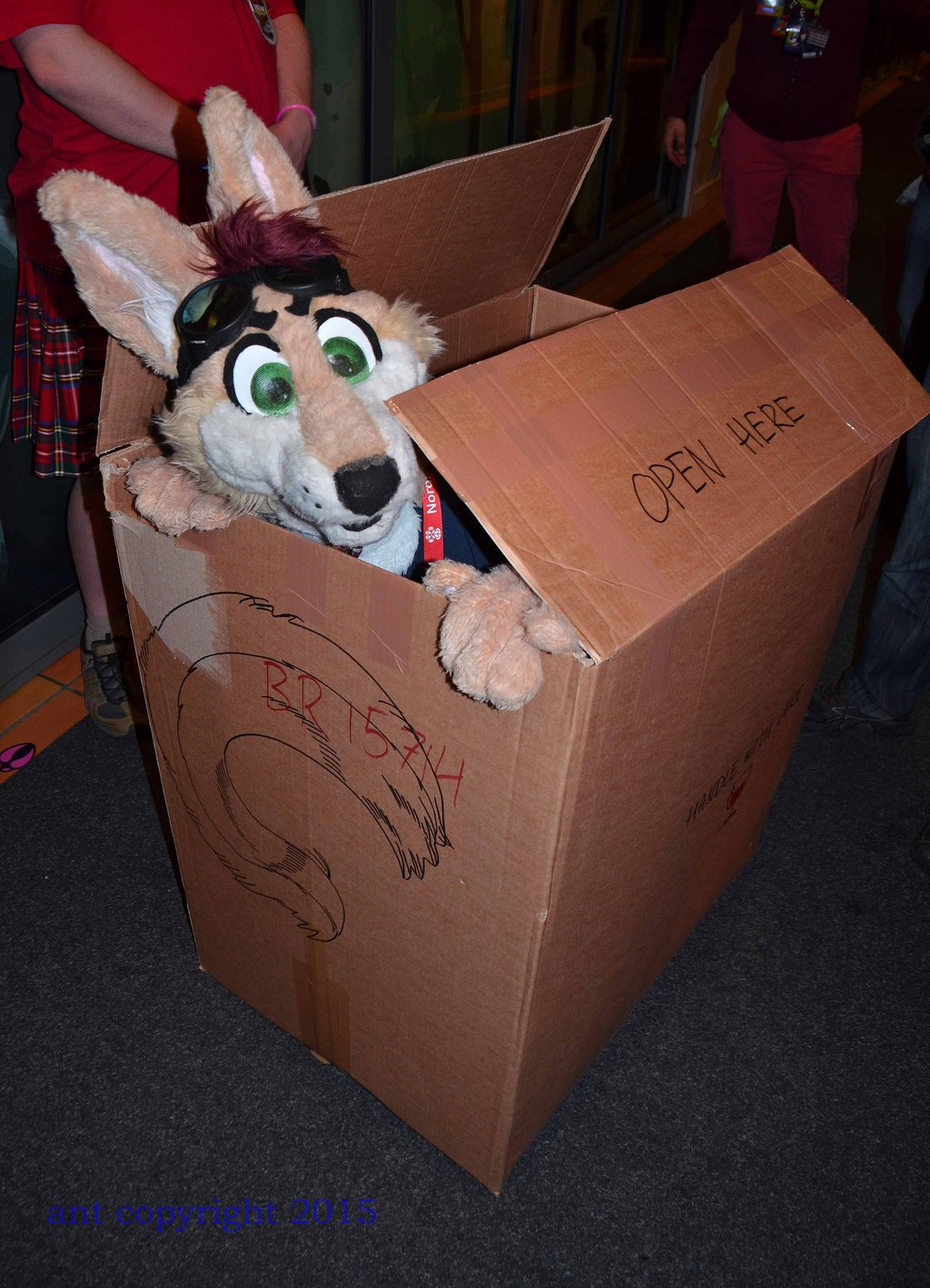 Jake in a box!