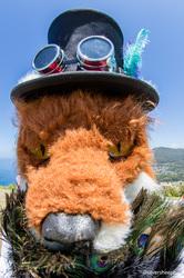 Bald Hill: Fisheye Fox