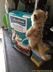 DP12: Penguins love meerkat powered cereal