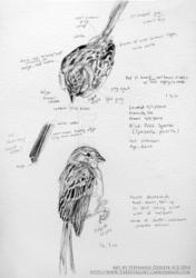 Field Sparrow Studies