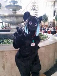 Fountain Kitty
