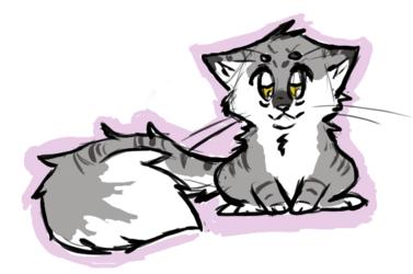 A Fluffy Kitty