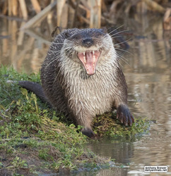 You are funny. Otter LOL!