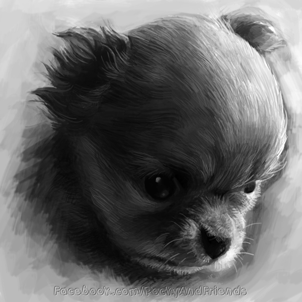 Puppy sketch