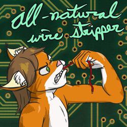 Hardware Cat [catmonth]