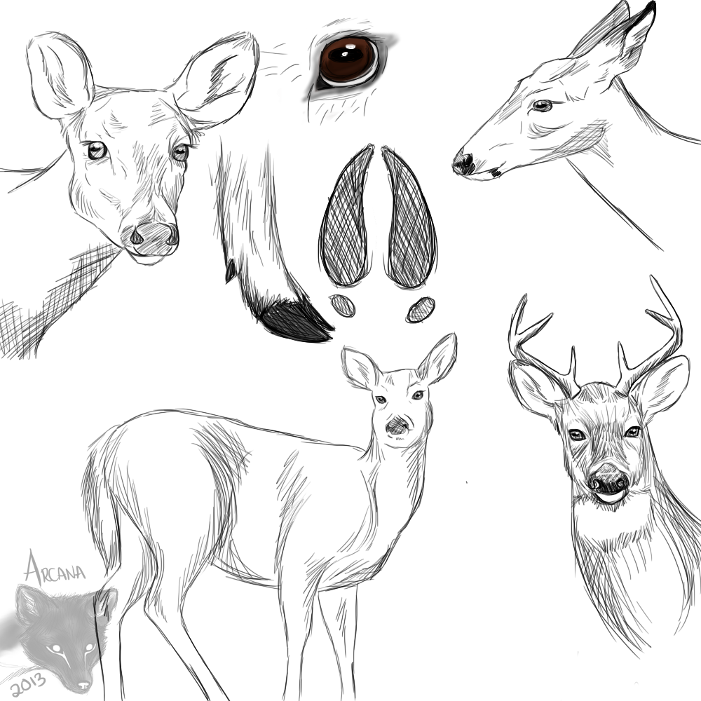 Most recent image: Deer