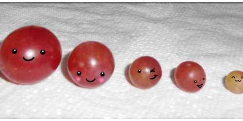 Grape Family