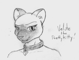 Captain Nibbles - Velute the Pretty Kitty