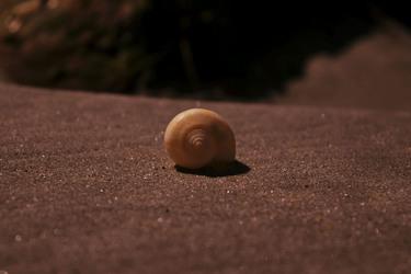 Spiral Shell in the Sun