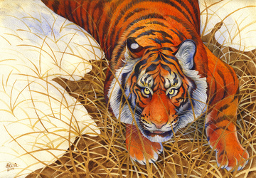 Tiger and thaw