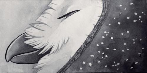 Inky Owl/Crow