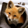 Avatar for foxovh