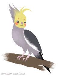 Cockatiel harpy