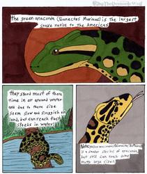 Random 3 Green Anaconda
