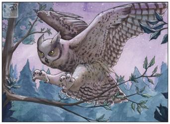 Owl My Owl