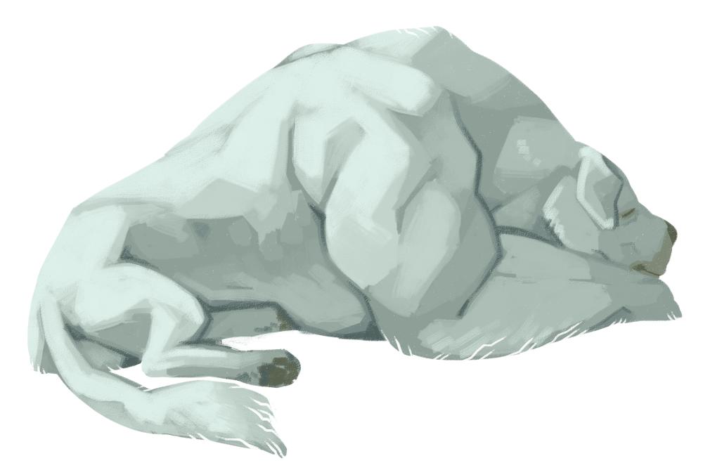 polarbeardog
