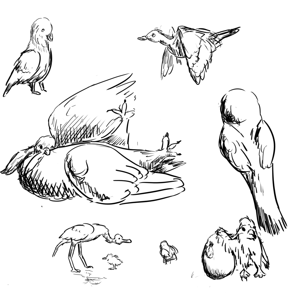 [untitled birds (9 May 2017)]