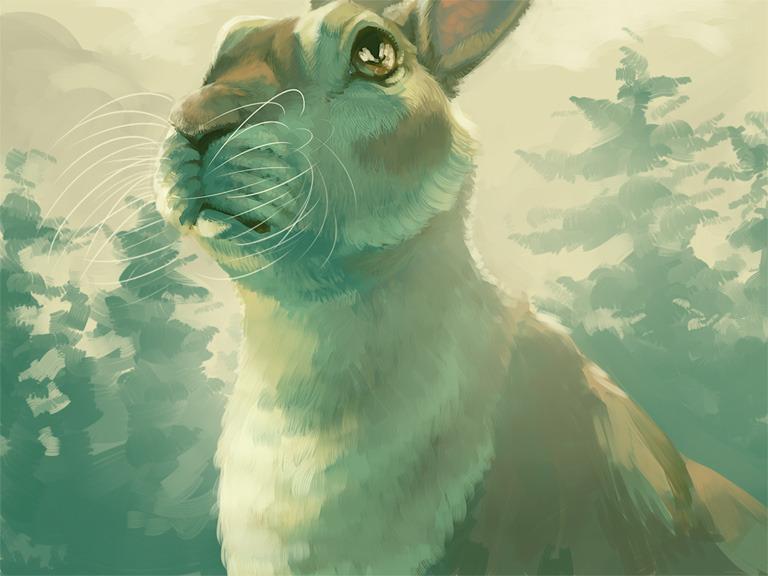 Rabbit Morning