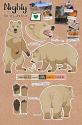Nighty Bear Reference 2020