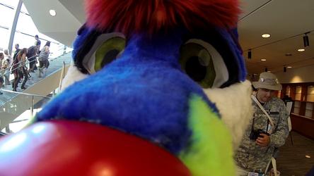 Sparkle Dog Noseboop - NWFF 2015