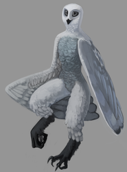 Commission- fullbody color pinup - Owl
