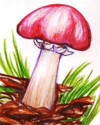Mushroom Guidesheet #1--King Stropharia or Winecap