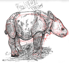DrawABox - Rhino Calf