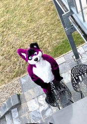 Hello up there and Happy Fursuit Friday!