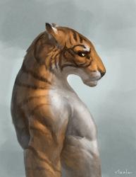Tiger - Profile