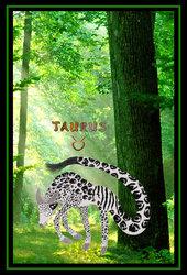 Taurus - Zodiac Collab