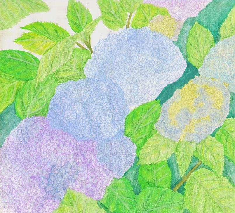 Most recent image: Hydrangea
