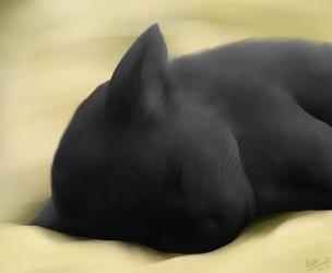 Napping Kitty
