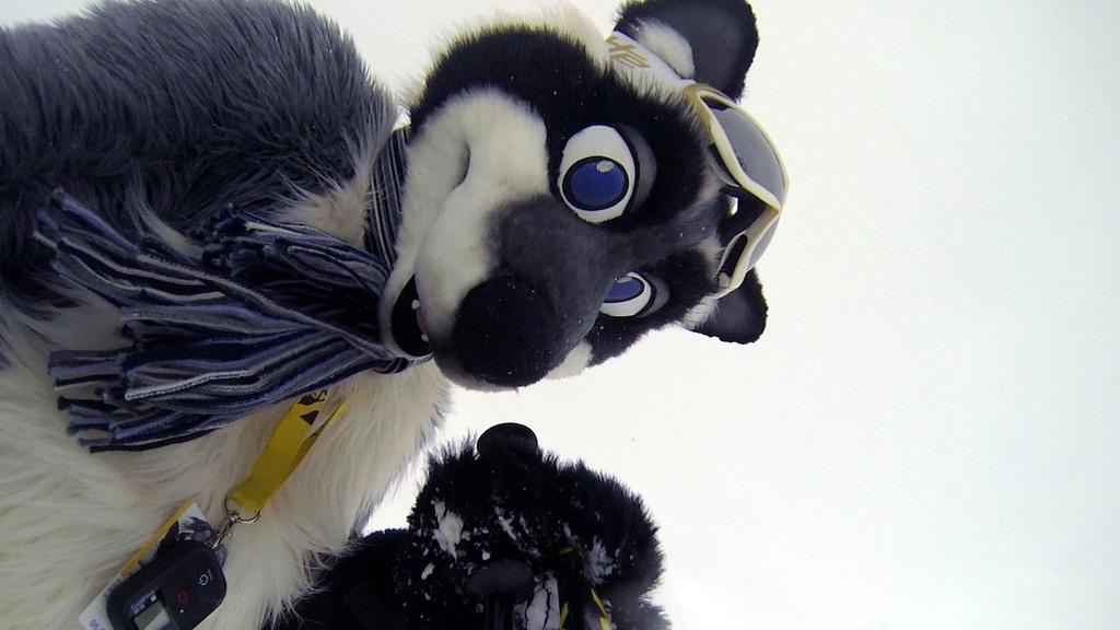 Curious raccoon!