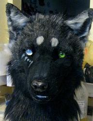 Abigail wolf