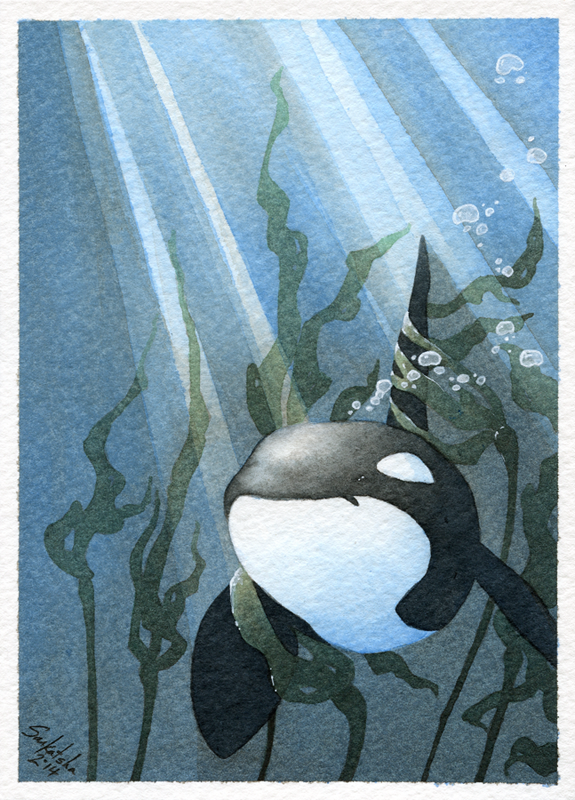 Featured image: Coy in the Kelp